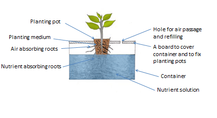 Root Dipping Technique