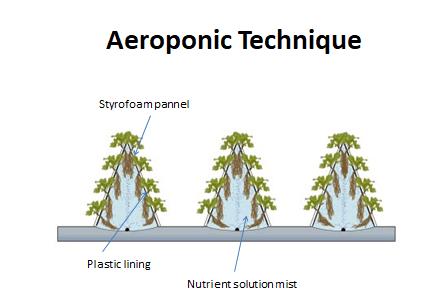Aeroponic Technique