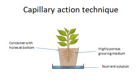 Capillary Action Technique