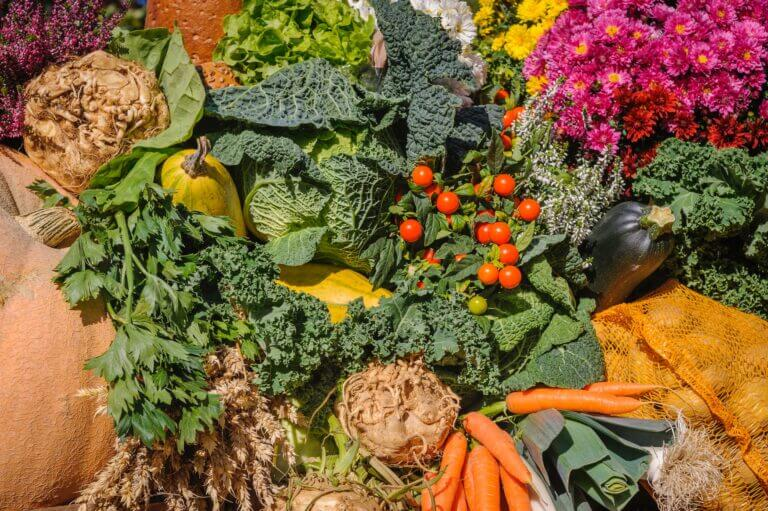 PEST & DISEASE OF CARROT, CABBAGE, LETTUCE, AND POTATO