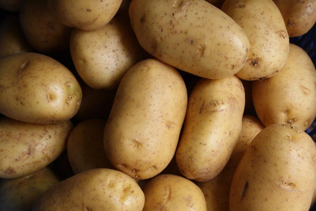 Pests and Diseases of Potato