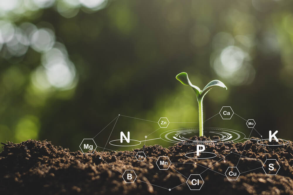 Plant Nutrients and Their Roles