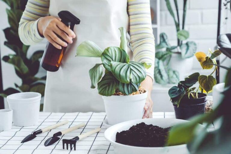 INDOOR HOUSE PLANT CARE